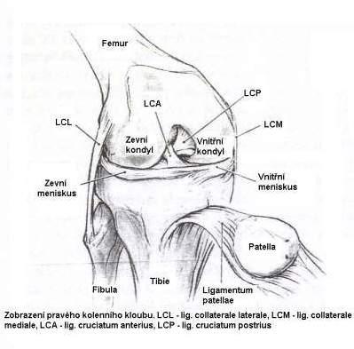 Poškození kolenních vazů